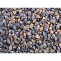 Chinese Buckwheat Yulin Origin (BW-001)