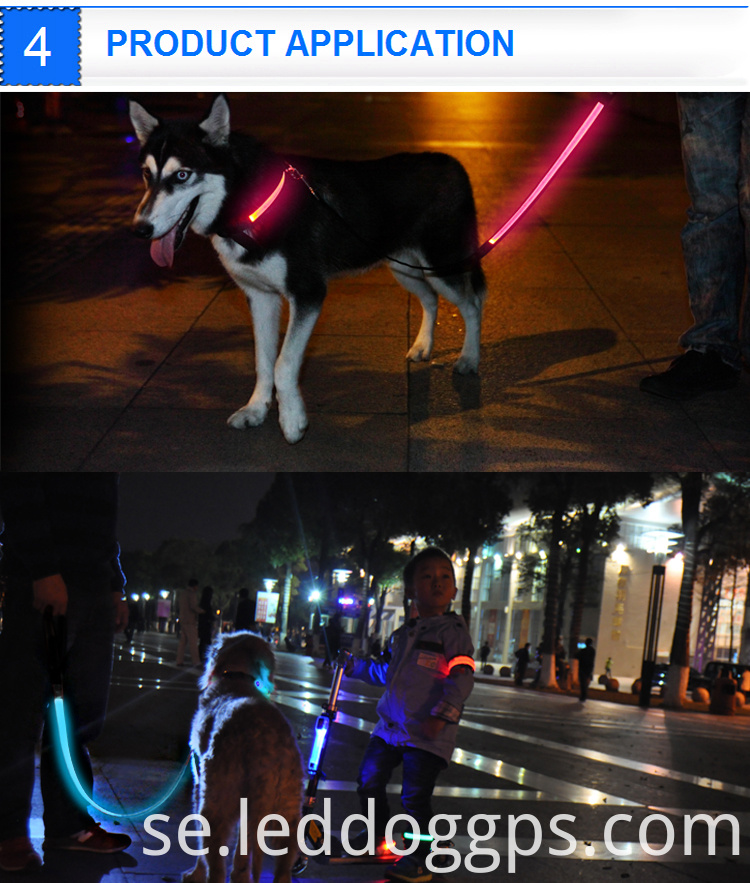 Light Up Leash For Dogs