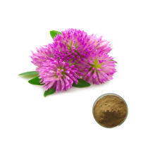 High Quality 8% - 40% Red Clover Extract Powder Formononetin