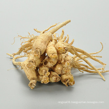 ren shen dried white ginseng anti-cancer panax ginseng plant for sale