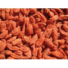Goji Berry Nouvelle culture