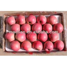 Alta qualidade Qinguan Apple