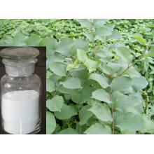 Extrait de racine de Resveratrol Polygonum Cuspidatum