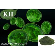 Polvo de alto contenido de proteína Chlorella 55%