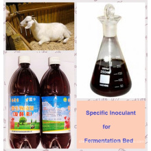 algal Bio Inoculant for making Ferment Bed Used