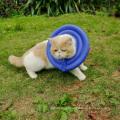 2017 Doglemi Best Selling Eco-Friendly Pet Dog Cat Protective E-Collar