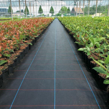 Black Woven Polypropylene Ground Cover