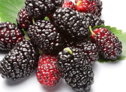 Serbuk Jus Mulberry Fruit