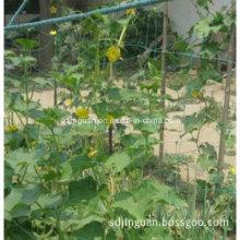 Climbing Plant Support Net