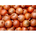 New Crop Oignon frais Oignon de qualité supérieure