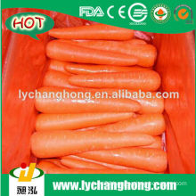High quality wholesale fresh carrot