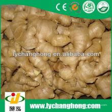 2014 neue Ernte luftgetrocknete Ingwer zum Verkauf