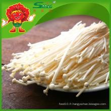 Fournisseur de champignons de qualité supérieure Flammulina velutipes Needle Mushroom