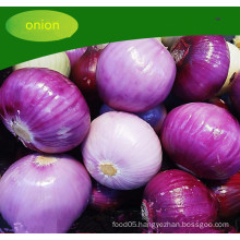 Chinese Fresh Red Harmless Onion