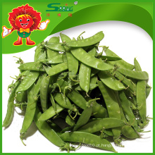 Yunnan alta qualidade fresca ervilha de neve (ervilhas verdes congeladas)
