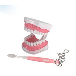 ABS Dental Model Teeth Care Model
