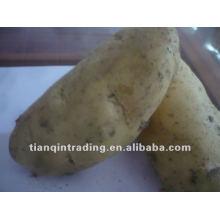 Картофель высокого качества для продажи