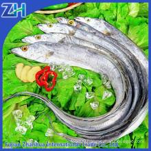 Frozen ribbon fish Hairtail fish cut