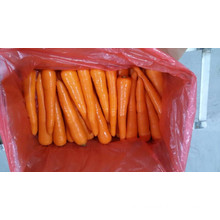 2016 Price of Fresh Carrot