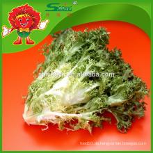 Salat mit langem Blatt High Grade Salat zum Verkauf