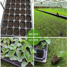 High Quality 72/128/200 Cells Seed Growing Trays / Fodder Seed Tray