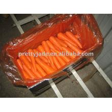 Zanahoria china fresca preminum para la exportación