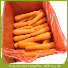 High quality fresh organic carrots
