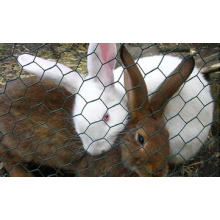 Rabbit Proof Wire Mesh Fencing