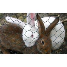 Кролик Доказательство ограждения из проволочной сетки