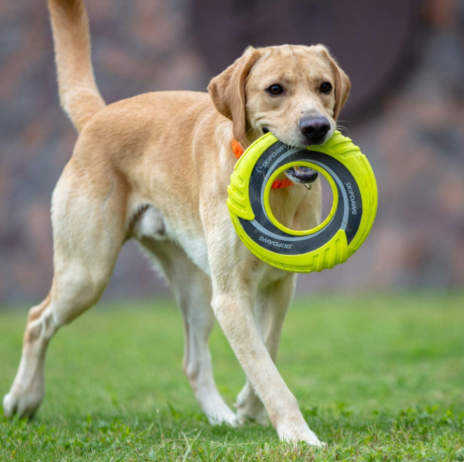 Outdoor Exercise Toy