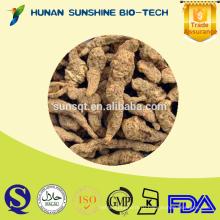 Горячая распродажа травяной медицины подготовленный корень rehmannia экспортер