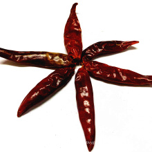 Factory Supply Dried Chilli Peppers  whole Wholesale