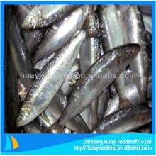 Leckere gefrorene Sardine Fisch frische Meeresfrüchte zum Verkauf