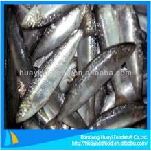 Viande de sardine congelée délicieuse poisson frais à vendre
