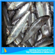 yummy frozen sardine fish fresh seafood for sale