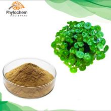 100% organic plant centella asiatica extract powder