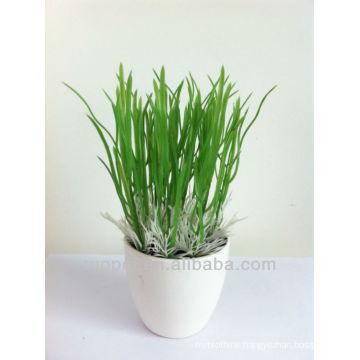 succulent plants indoor plants bonsai