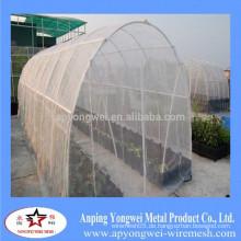 Ein Ping Insekt Netze in China gemacht