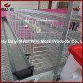 Novo projeto economiza gaiolas automáticas de criação de frango para venda