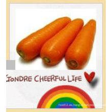 Zanahoria zanahoria 2016 zanahoria fresca