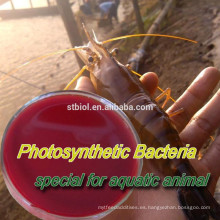 BACTERIAS FOTOSINTÉTICAS (PSB) / aditivos para piensos / FEED PROBIOTICS