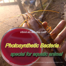 PHOTOSYNTHETIC BACTERIA (PSB)/feed additives/FEED PROBIOTICS