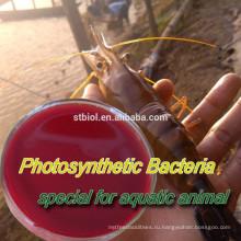ФОТОСИНТЕЗИРУЮЩИЕ бактерии (ПСБ)/кормовые добавки/пробиотики корма