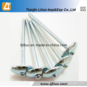 Plain or Screw Gavlvanized Roofing Nails with Umbrella Head