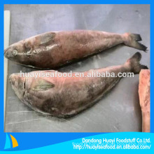 high quality fat greenling fish