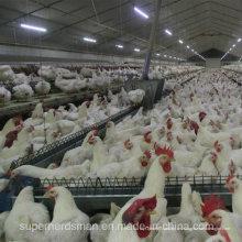 Automatische Geflügelfütterung für den Züchter