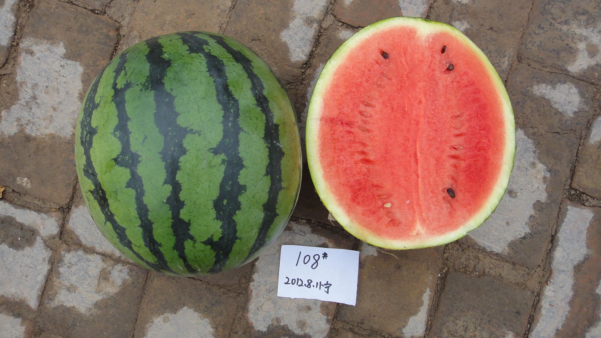 Round Hybrid Watermelon Seeds For Sales