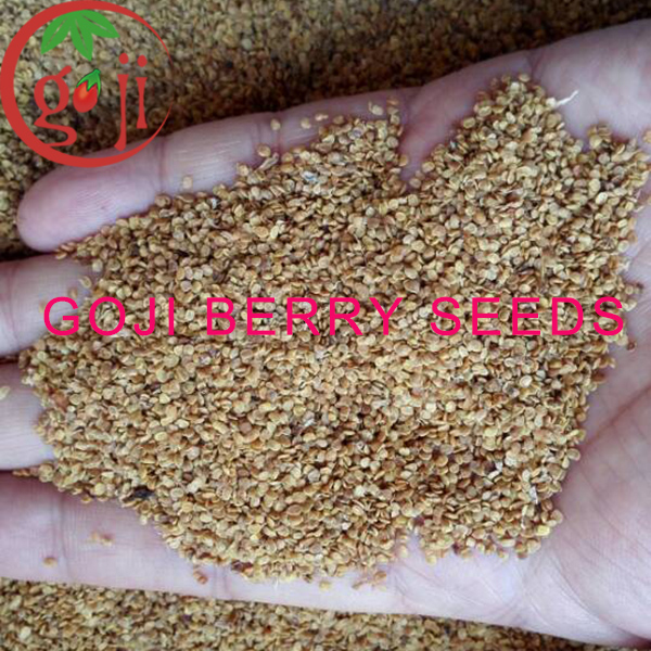 Goji Berry seeds