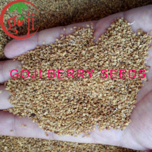 Ningxia NQ-01 /NQ-07 Goji Berry seeds for plant