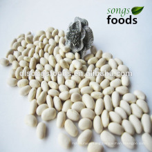 Dry White Beans and White Beans Price